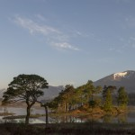 Scots Pine, Loch Tulla and the Black Mount Estate