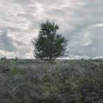 Stanton Moor Tree I