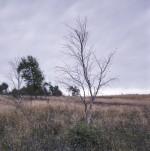 Stanton Moor Tree II