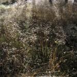 Stanton Moor Grass II