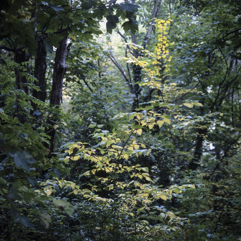 Brincliffe Edge Woods