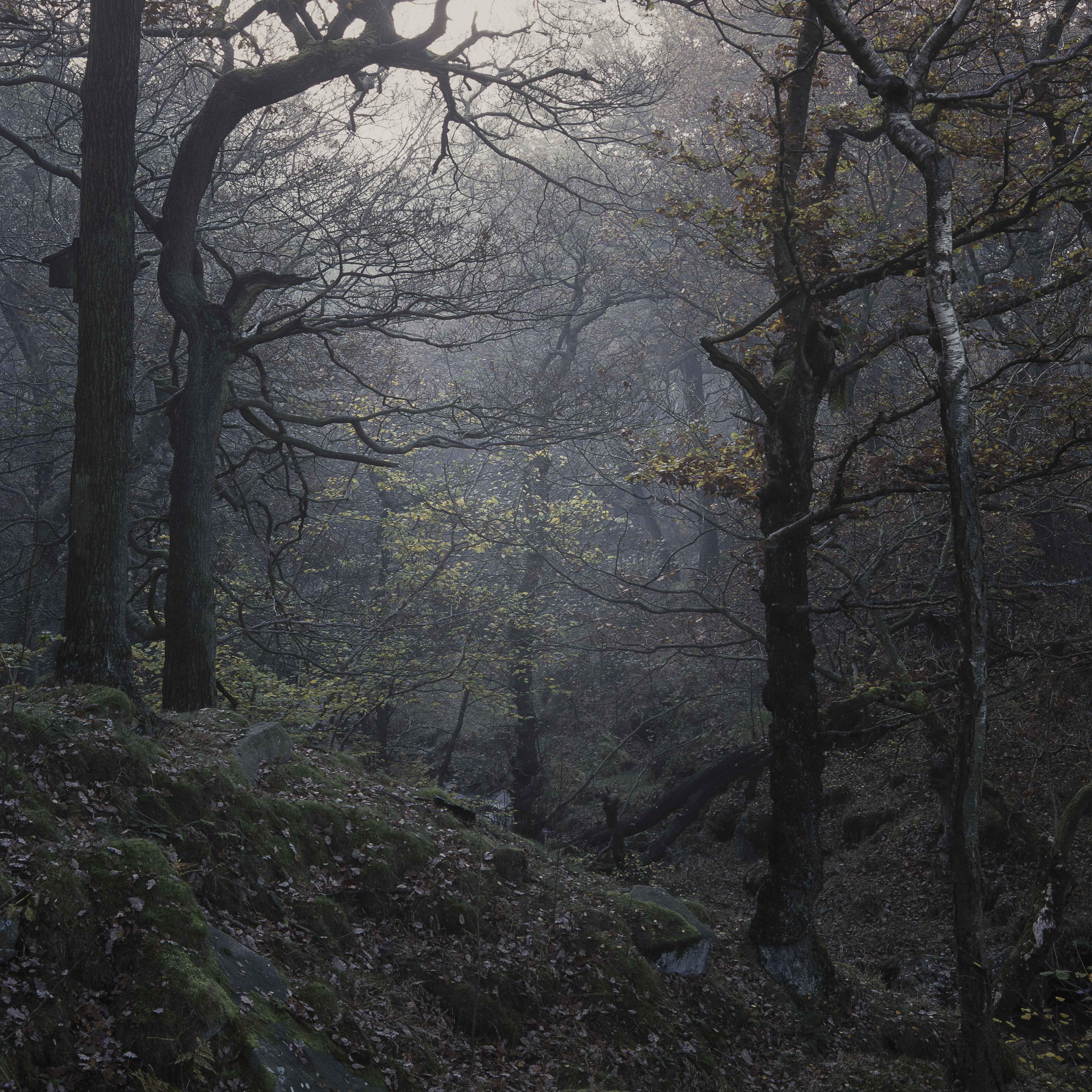 misty trees peak district