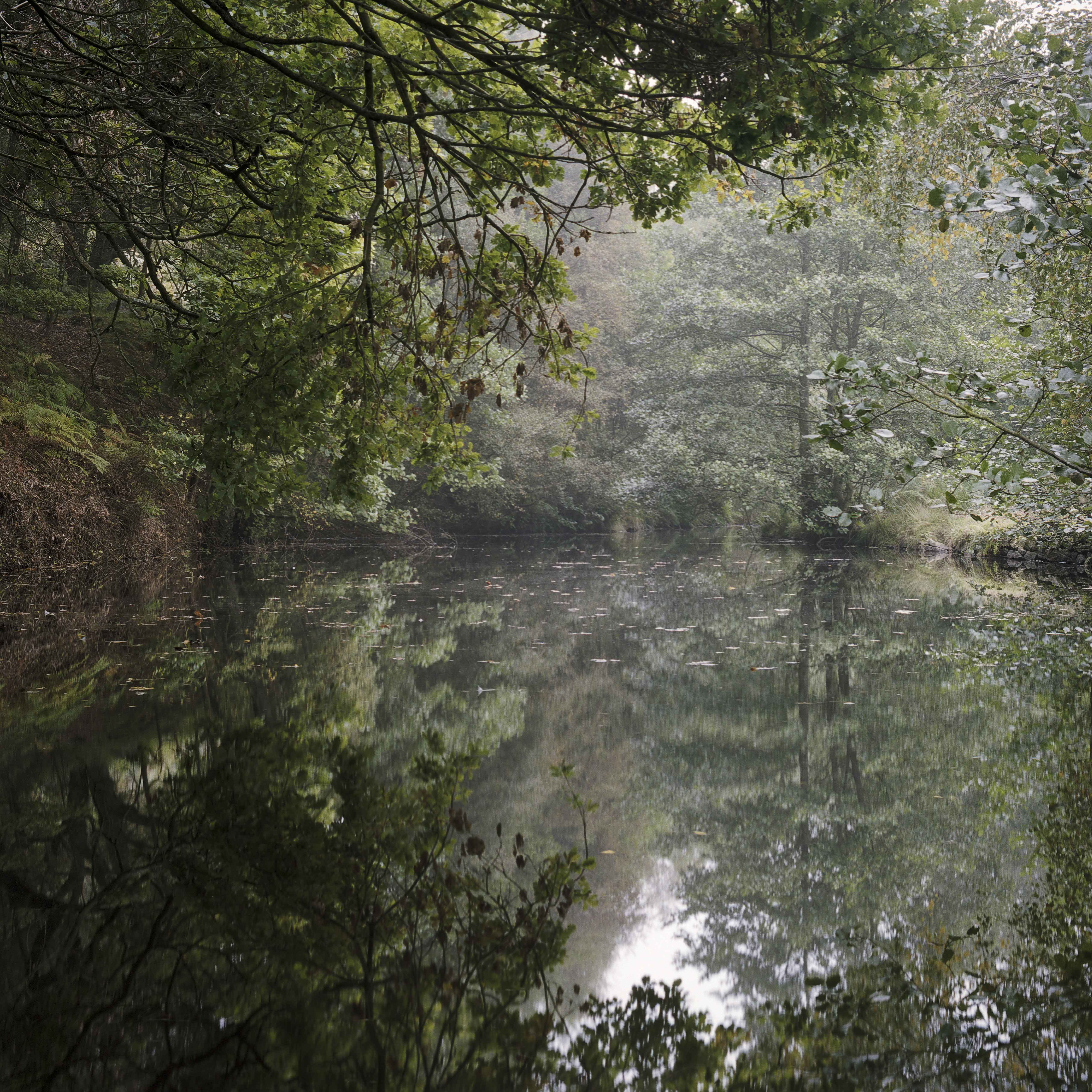 millpond trees calm peak district