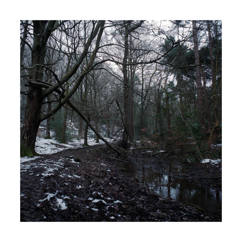 Limb Brook, Ecclesall Woods