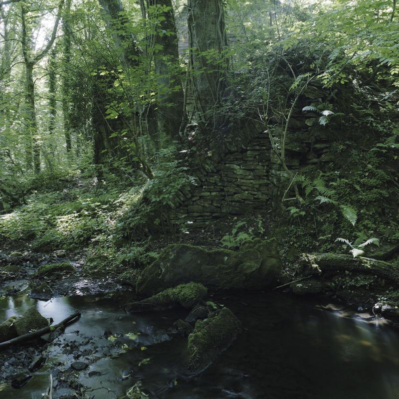 Limb Brook-11